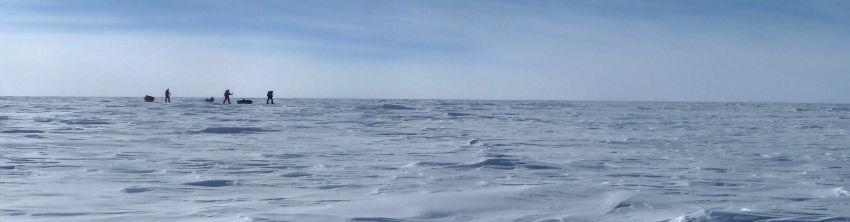 polar-traja.jpg